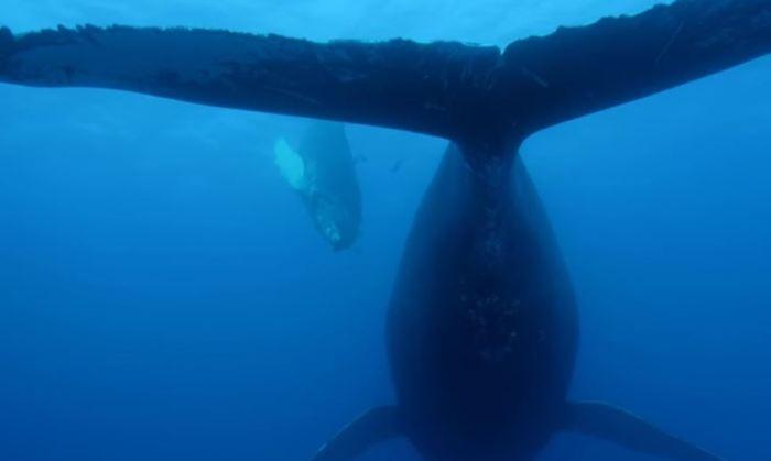 «Би-би-си» запустило «медленное телевидение» и предлагает провести десятки часов в океане