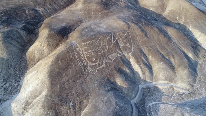 Изображение косатки на плато Пальпа.
