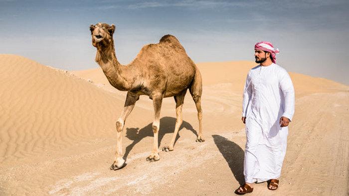 Откуда верблюды.