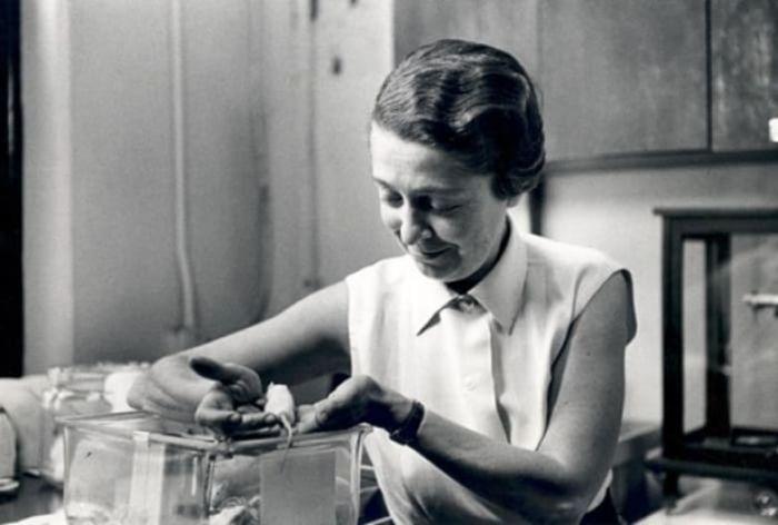 Рита Леви-Монтальчини в лаборатории.
