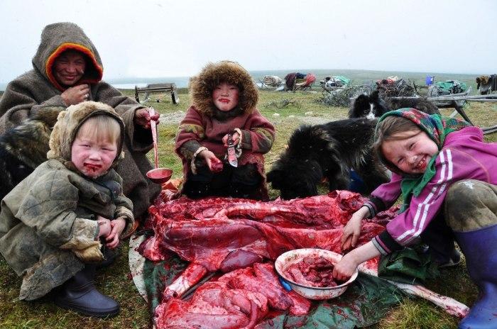 В пищу употребляли всего оленя за исключением головы и легких, которыми обычно кормили собак.