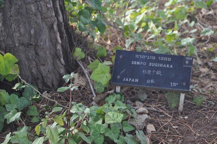 Мемориальная доска Тиунэ «Семпо» Сугихары в саду мемориала Яд ва-Шем, Иерусалим