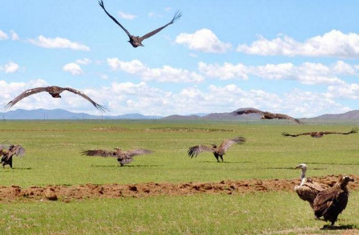 Воздушное погребение в Монголии.
