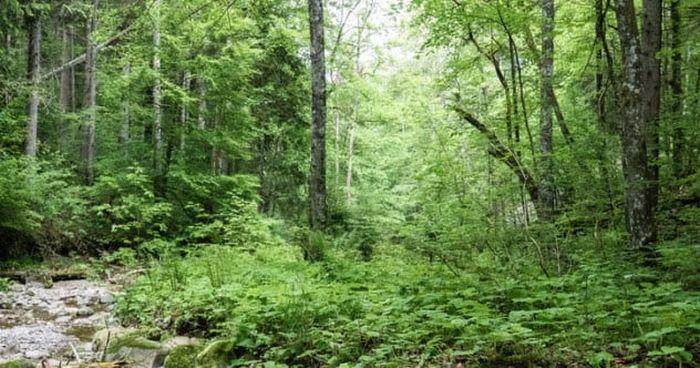 Где-то в Баварском лесу.