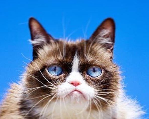 Соус Тардар - очень сердитая кошка.