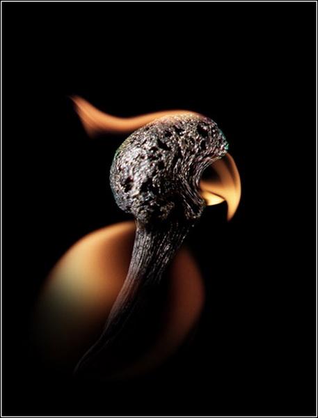 Необычные фотографии Станислава Аристова. Попугай.
