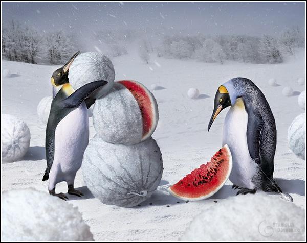 Креативные фотографии Станислава Одягайло. Херсонская зима.