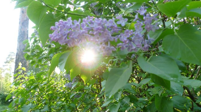 Солнце через цветок