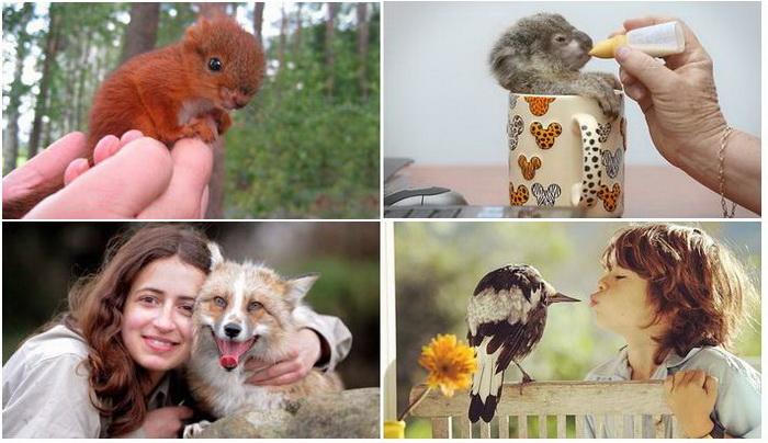 Дикие животные, ставшие домашними любимцами