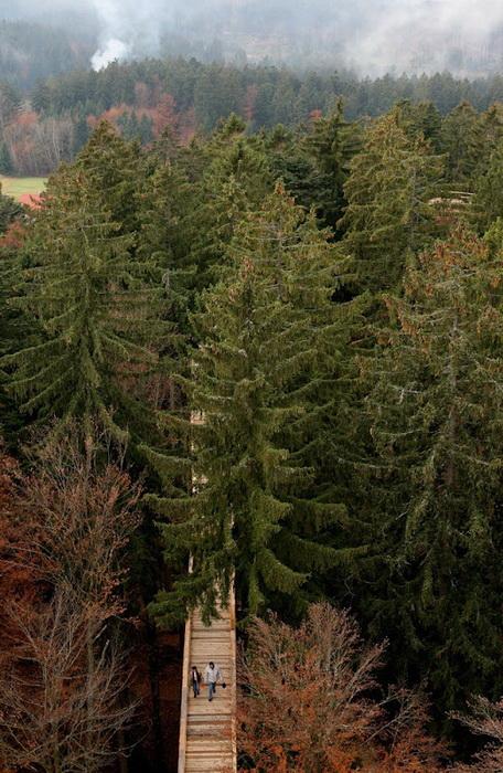Протяженность мостов в Баварском лесу 1300 метров