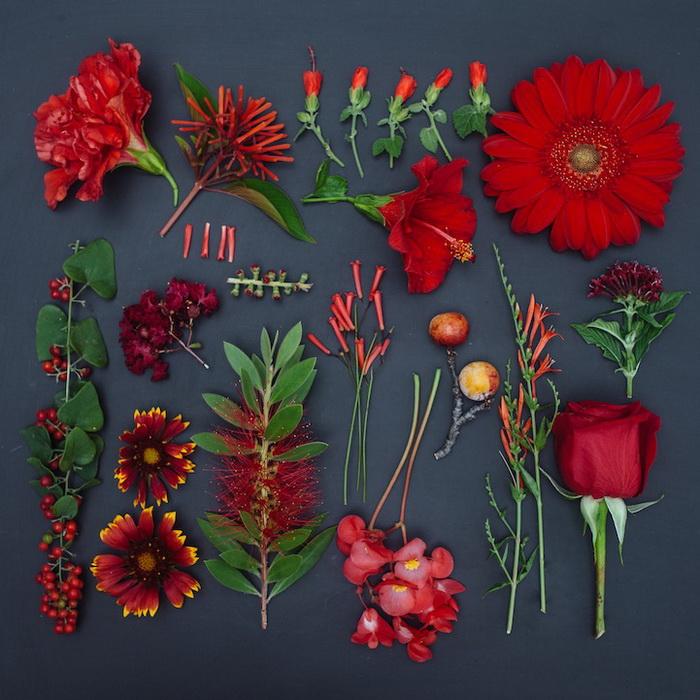 Гербарии цветы