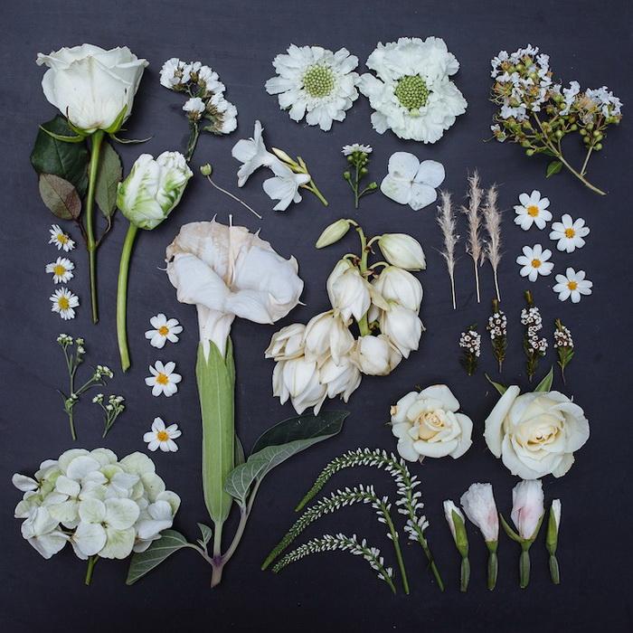 Монохромные коллекции цветов от Emily Blincoe