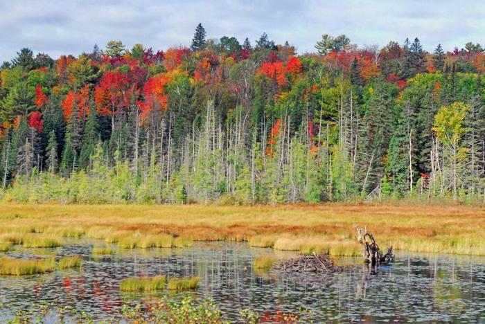Осенние пейзажи канадского парка Алгонквин