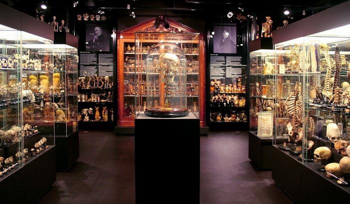 Музей Вролика в Амстердаме