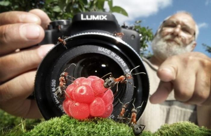 Муравьи в объективе фотохудожника