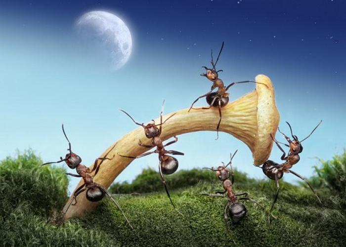 Тайная жизнь муравьиного пролетариата