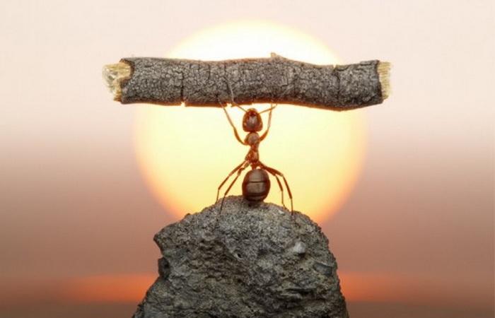 Настоящий муравей-богатырь