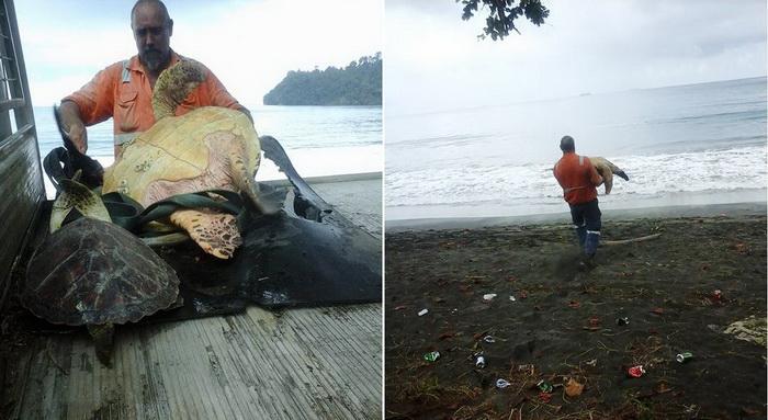 Мужчина из Папуа-Новой Гвинеи спасает выловленных черепах, выпуская их в море