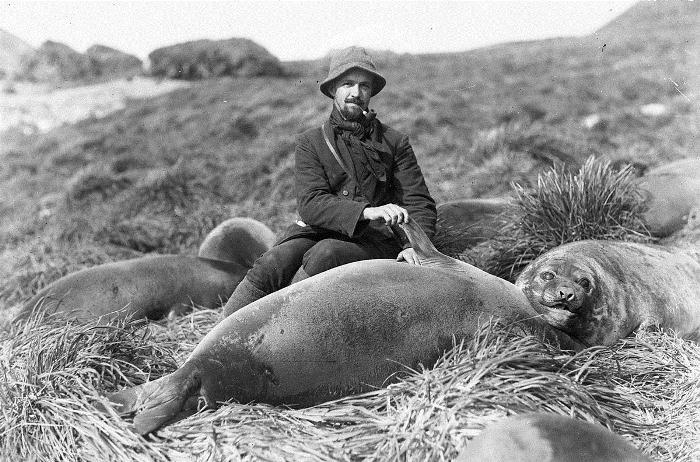 Исследователь с детенышами морских слонов.
