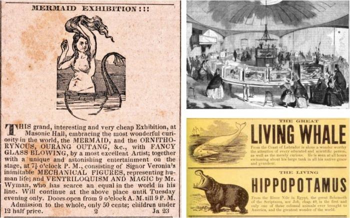 Афиша выставки русалок, бассейнов с китом и гиппопотамом