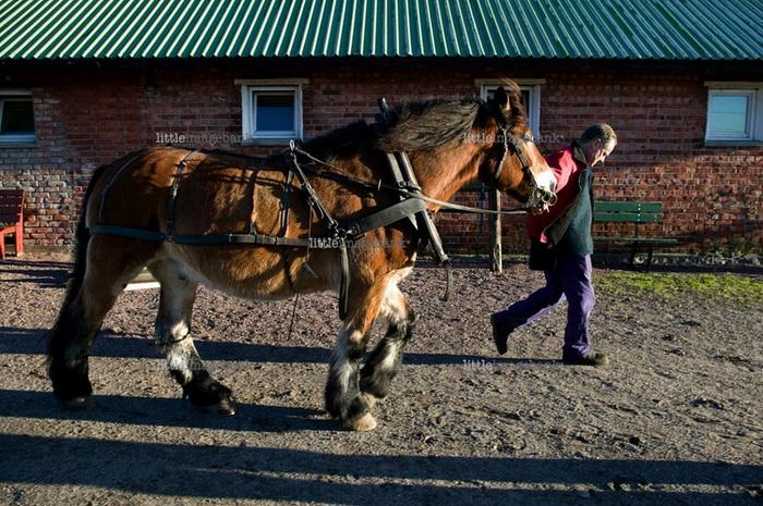 Заключенные выполняют обязательные работы: занимаются сельским хозяйством или ухаживают за лошадьми