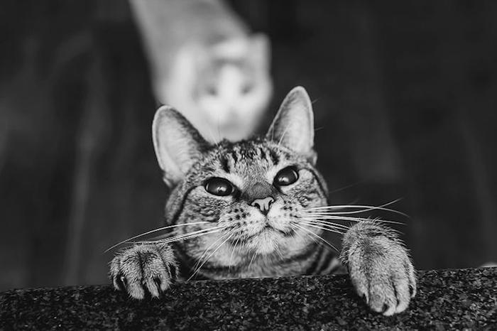 Фотографии кошек от Фелисити Берклиф