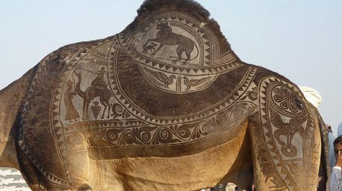 Bikaner Camel Festival: спины верблюдов - настоящее произведение искусства