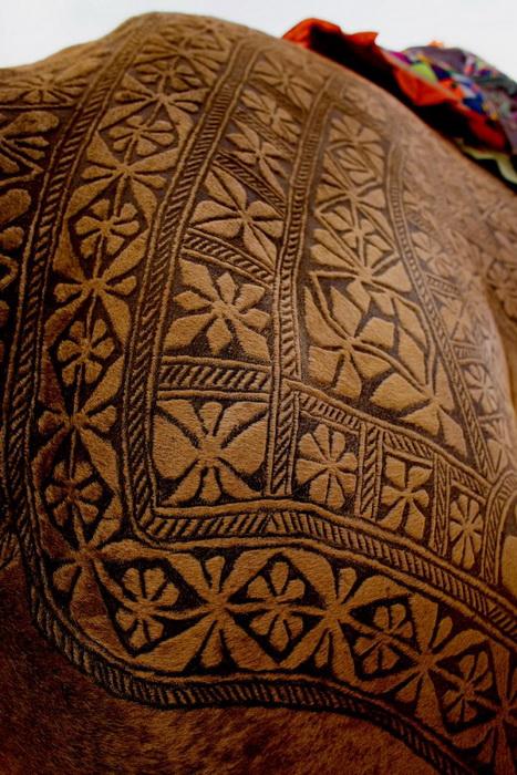 Bikaner Camel Festival: на спинах верблюдов выстригают национальные узоры