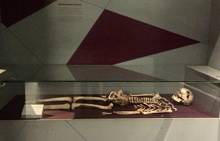 Британские ученые узнали, как выглядели предки современных европейцев.