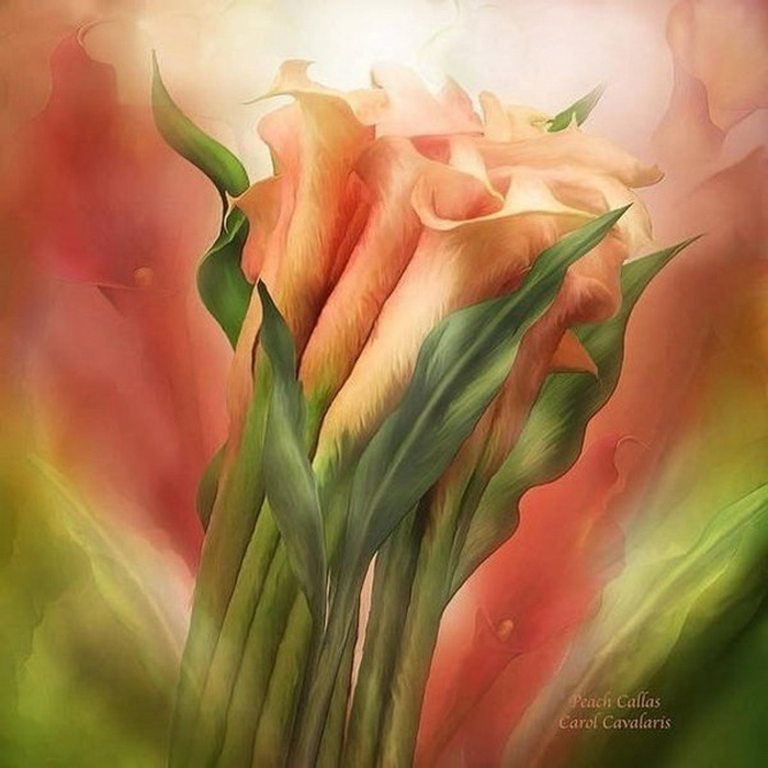 Цифровая живопись от Кэрол Каваларис (Carol Cavalaris)