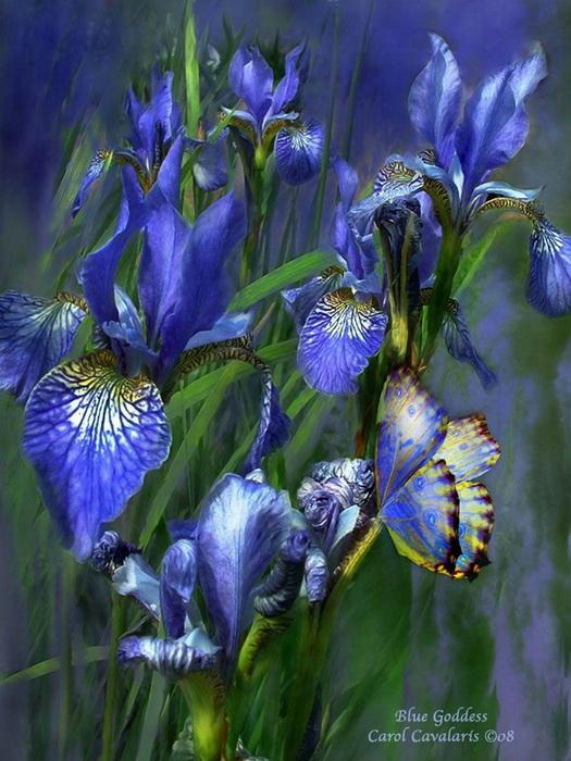 Цветы на рисунках Кэрол Каваларис (Carol Cavalaris)