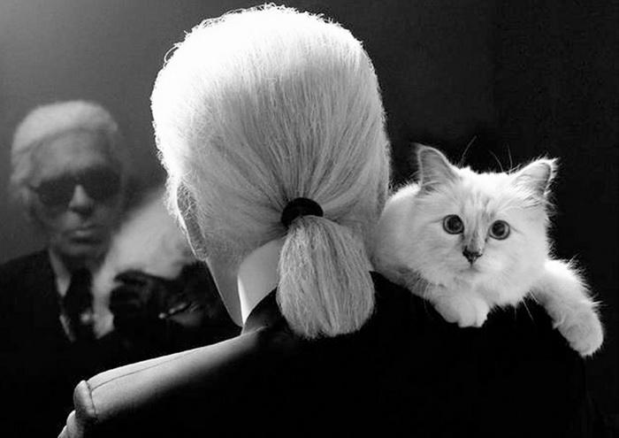 Карл Лагерфельд и его любимая кошка Choupette