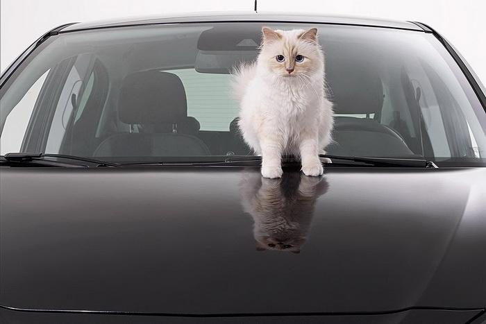 Одна из самых богатых кошек в мире