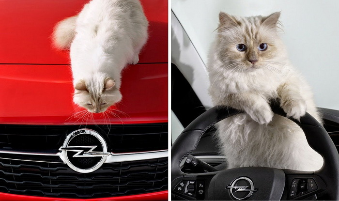 Кошка Карла Лагерфельда в рекламе автомобильной корпорации Opel