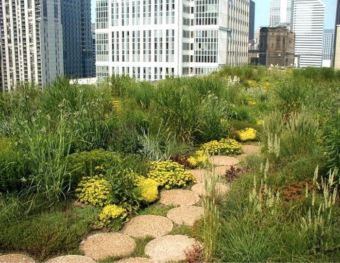 Крыша City Hall в Чикаго - островок зелени в бетонном море