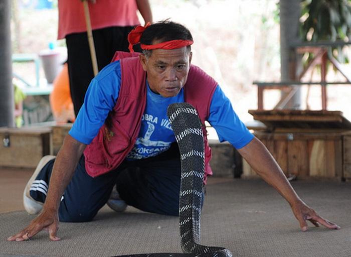 *Змеиная деревня* в Таиланде
