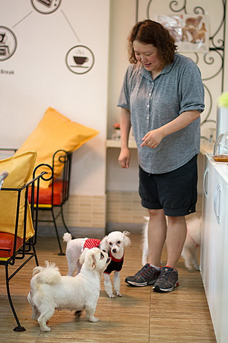В Dog Cafe можно найти настоящего четвероногого друга