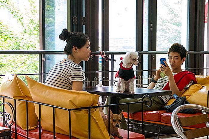 Dog Cafe: чашка кофе в компании с четвероногим другом