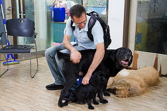 В Dog Cafe живет 20 собак разных пород