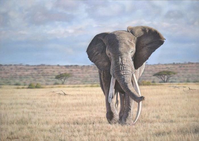 Эрик Уилсон ратует за сохранение диких животных