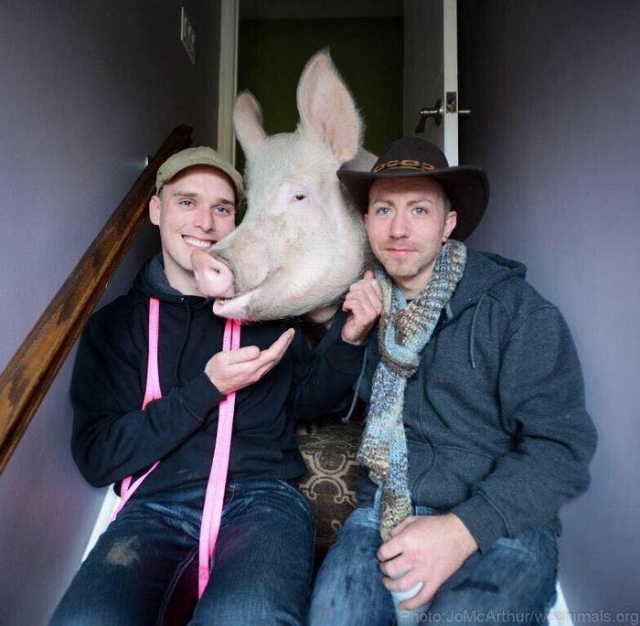 Стив, Дерек и их любимица - свинья Эстер.