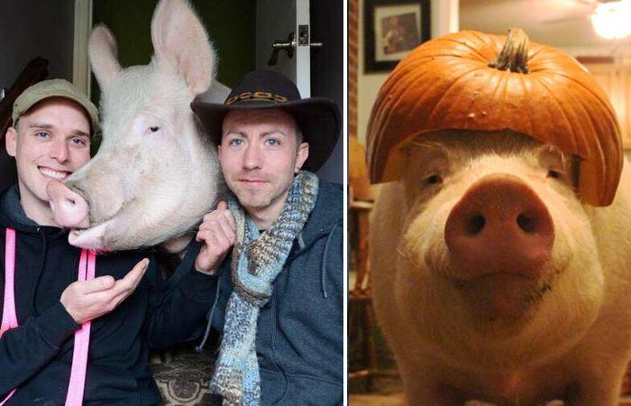 Свинья Эстер - самый необычный домашний питомец.