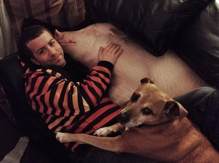 Собака и свинья отлично ладят вместе.