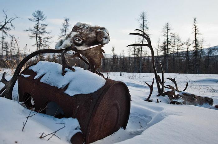 Охота на оленей - основной промысел