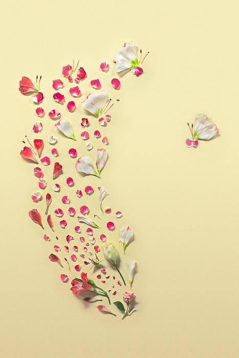 Рисунки из цветочных лепестков от фотографа Фонг Ци Вея (Fong Qi Wei)