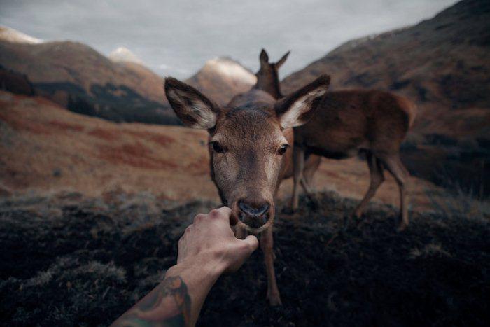 Дикие животные на расстоянии вытянутой руки. Фотограф Фран Март (Fran Mart).