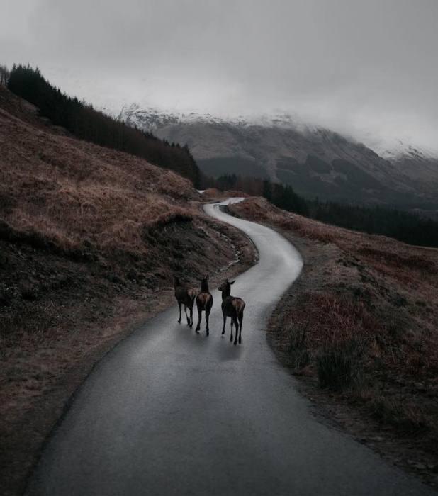 Дикие животные на расстоянии вытянутой руки. Фотографии от Фран Март (Fran Mart).