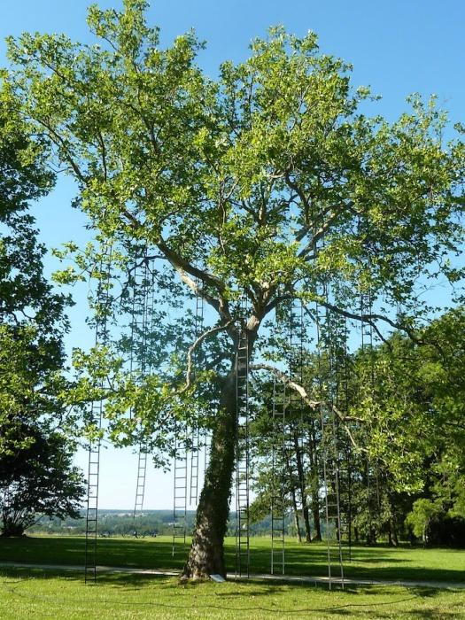 Лестницы на дереве: оригинальная инсталляция от Francois Mechain