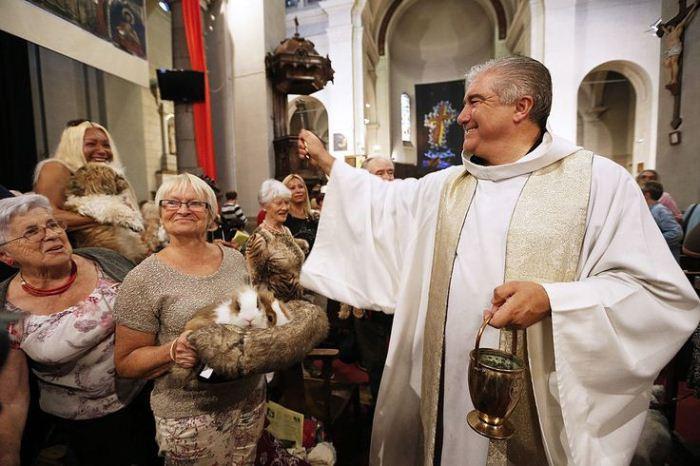 Месса для кроликов и морских свинок. Фото: rg.ru