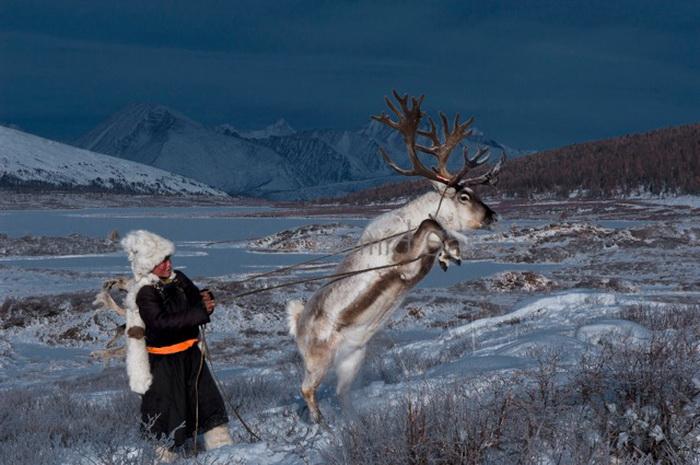 Цаатаны - древние оленеводы (Монголия)